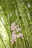 Orquídeas y tallos del bambú Foto de archivo