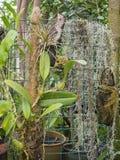Orquídeas y tilandsia de las plantas en la rejilla Fotografía de archivo