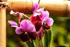 Orqu?dea rosada hermosa - detalle de una flor de la planta de la casa fotografía de archivo