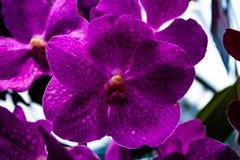 Orqu?dea rosada hermosa - detalle de una flor de la planta de la casa imagen de archivo libre de regalías