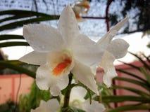 Orquídea Fotos de archivo