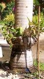 Orquídea en el árbol Imágenes de archivo libres de regalías