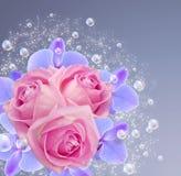 Orquídea, rosas e bolhas Imagens de Stock