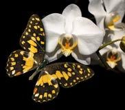 Orquídea y mariposa blancas Imágenes de archivo libres de regalías