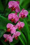 Orquídeas Imágenes de archivo libres de regalías