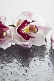 Orquídeas que flotan en el agua Foto de archivo