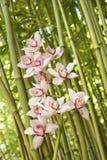 Orquídeas y tallos del bambú Imagen de archivo libre de regalías