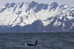 Orque et montagnes Photographie stock libre de droits