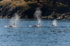 Orques à Vancouver images stock