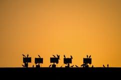 Orquesta de pájaros Fotografía de archivo libre de regalías