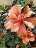 Orquidea апельсина bogota улицы сада Стоковое Изображение
