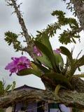 Orquidea storczykowy kwiat Obrazy Royalty Free