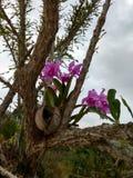 Orquidea storczykowy kwiat Obraz Stock