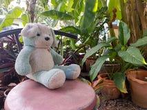 Orsacchiotti nel giardino Immagini Stock