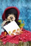 Orsacchiotto della peluche con uno strato scrivere testo in un cappello caldo di Borgogna fra le foglie di autunno su un fondo di Fotografia Stock Libera da Diritti
