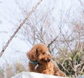 Orsacchiotto timido Fotografia Stock