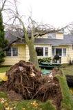 Orsakat stupat träd för hem- skada arkivbild