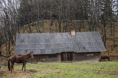 ?orse near an old house. Horse in the yard in the park Shevchenko, Ukraine, Lviv Royalty Free Stock Images