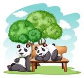Orsi di panda al parco illustrazione vettoriale