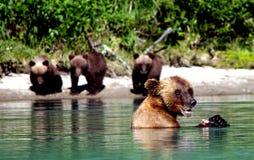 Orsi nel lago Immagini Stock Libere da Diritti