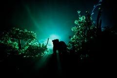 Orso arrabbiato dietro il cielo nuvoloso del fuoco La siluetta di un orso nel fondo nebbioso di buio della foresta Fotografie Stock