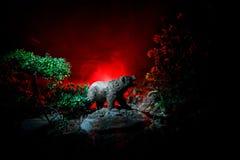 Orso arrabbiato dietro il cielo nuvoloso del fuoco La siluetta di un orso nel fondo nebbioso di buio della foresta Fotografia Stock Libera da Diritti