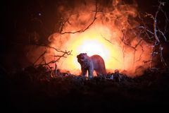 Orso arrabbiato dietro il cielo nuvoloso del fuoco La siluetta di un orso nel fondo nebbioso di buio della foresta Fuoco selettiv Immagini Stock Libere da Diritti