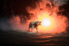 Orso arrabbiato dietro il cielo nuvoloso del fuoco La siluetta di un orso nel fondo nebbioso di buio della foresta Fuoco selettiv Immagine Stock Libera da Diritti
