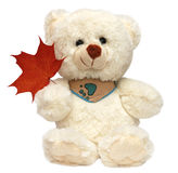 Orso bianco del giocattolo isolato Fotografie Stock