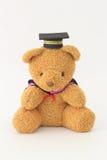 Orso bruno che indossa un cappuccio di graduazione Immagini Stock