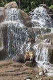 Orso bruno nel parco di Praga - parco di Praski vicino allo zoo a Varsavia, Polonia Fotografie Stock