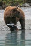 Orso con la cattura Fotografia Stock Libera da Diritti