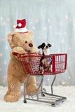 Orso dell'orsacchiotto, carrello di acquisto, chihuahua Immagini Stock