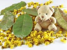 Orso delle foglie del fiore della cassia Fotografie Stock Libere da Diritti