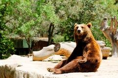 Orso di Brown in giardino zoologico Fotografia Stock Libera da Diritti