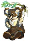 Orso di koala Fotografie Stock Libere da Diritti
