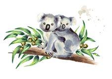 Orso di koala con fare da baby-sitter sul ramo dell'eucalyptus, isolato su fondo bianco Illustrazione disegnata a mano dell'acque illustrazione vettoriale