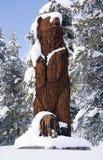 Orso di legno in neve Immagini Stock Libere da Diritti