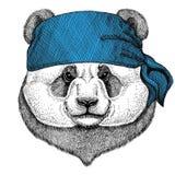 Orso di panda, bandana dell'animale selvatico di bambù dell'orso o bandana o immagine d'uso del bandanna per il pirata Seaman Sai Immagini Stock Libere da Diritti