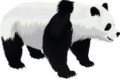 Orso di panda gigante di vettore isolato su bianco Fotografia Stock Libera da Diritti