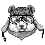 Orso di panda, illustrazione d'uso del casco del club della mosca dell'aviatore del motociclo del motociclista dell'animale selva royalty illustrazione gratis