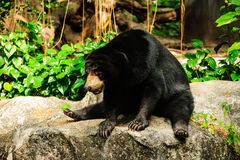 Orso di seduta Fotografia Stock
