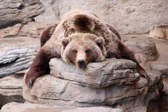 Orso grigio di rilassamento Teddy Bear Rug Fotografie Stock Libere da Diritti