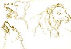 Orso, leone e lupo Fotografia Stock