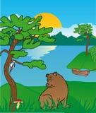 Orso nel lago Illustrazione di Stock