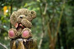 Orso nella foresta Fotografia Stock