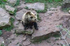 Orso nello zoo fotografia stock
