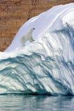 Orso polare - fiordo di Franz Joseph - la Groenlandia Fotografia Stock Libera da Diritti