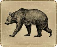 Orso selvaggio animale, a mano disegno. Illustratio di vettore Fotografia Stock