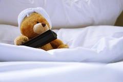 Orso solo a letto Immagine Stock Libera da Diritti